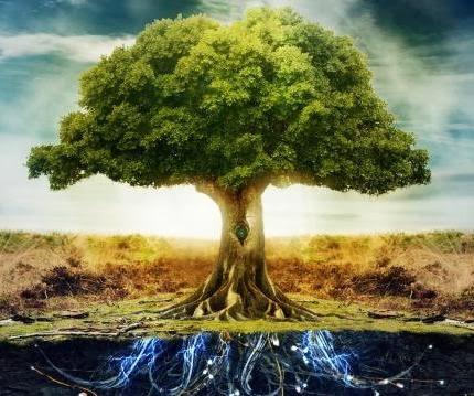 a-Tree-Of-Life-Wallpaper-1920x1080