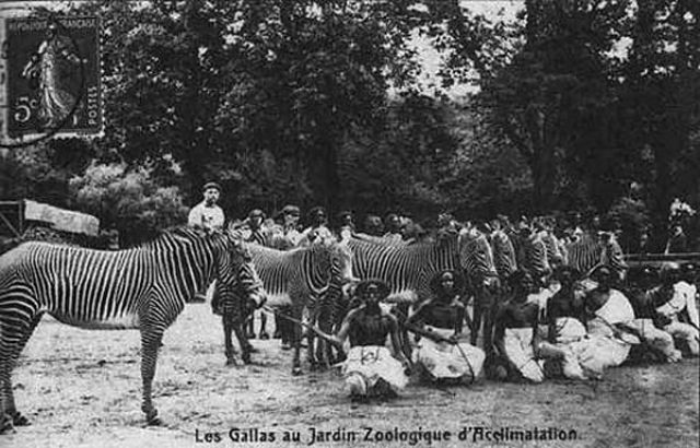 Deep Racism The Forgotten History Of Human Zoos Wikipedia